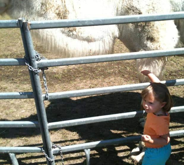 Zirkus Knie – Zoo Besuch
